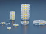 Sejttenyésztő csésze 100 mm, 240 db